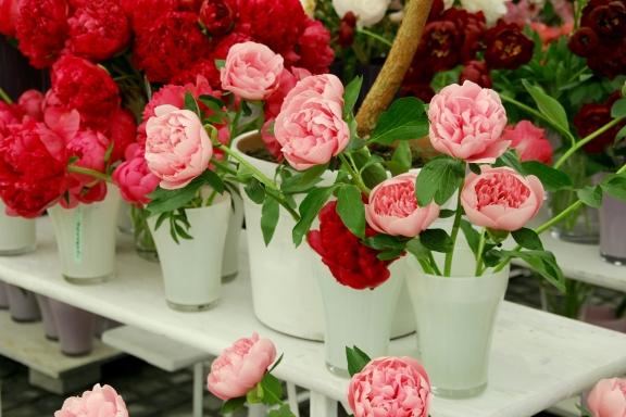 Английские розы: посадка и уход