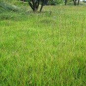 Отдельные травы