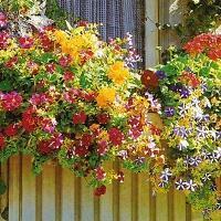 Смесь цветов