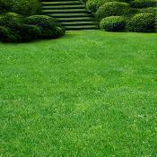 Газоны и травы