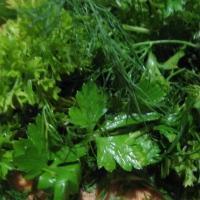 Семена зелени