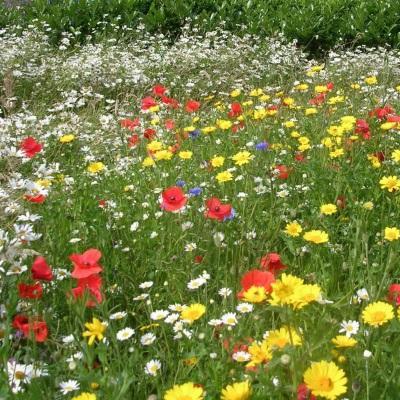 Газонная трава Цветочная поляна мавританский газон