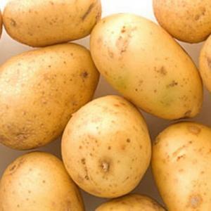 Семенной картофель Лилея