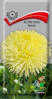 Астра Гала Желтая