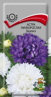Астра низкорослая Василиса