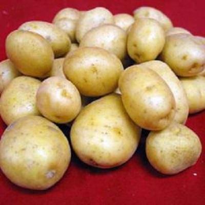 Семенной картофель Великан