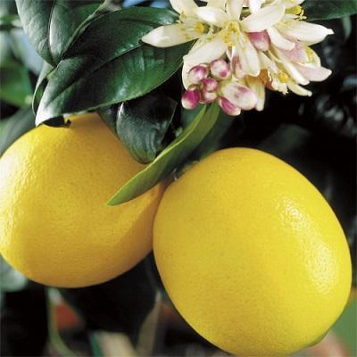 Цитрус Лимон Мейера