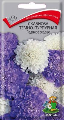 Скабиоза темно-пурпурная Ледяное сердце